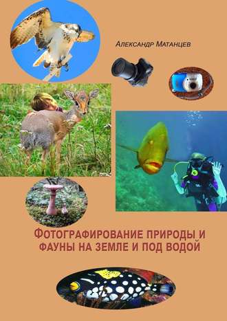 Александр Матанцев, Фотографирование природы ифауны наземле ипод водой